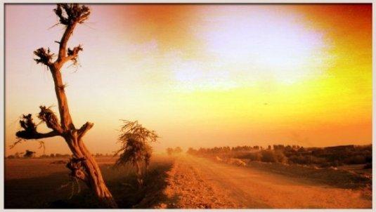 Tando Bagho - Ninto Road, Sindh, Pakistan.